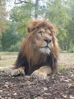 Sortie Zoo de Thoiry - Octobre 2018