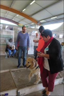 Association les 4 A chiens guides d'aveugles