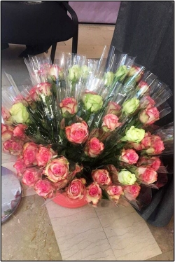 Elles sont jolies nos roses
