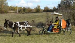 L'ensemble âne avec sa passagère