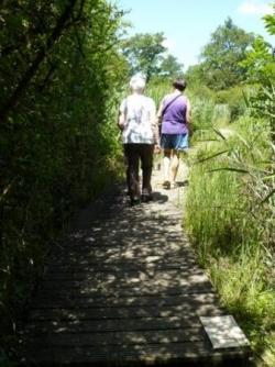 Début de la visite du marais sur caillebotis