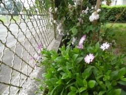 Le Jardin en Fleurs 2018 !