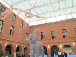 Visite Museum Histoire Naturelle de Toulouse