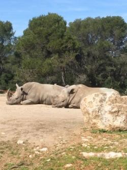 Le zoo de Montpellier