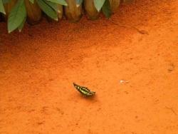 Serre aux papillons 26 04 2102 012.jpg