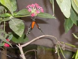 Serre aux papillons 26 04 2102 020.jpg