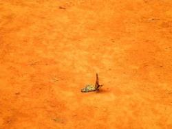 Serre aux papillons 26 04 2102 016.jpg