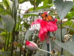 Serre aux papillons 26 04 2102 014.jpg