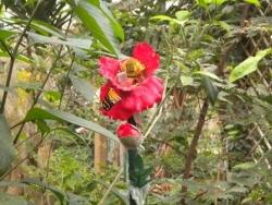 Serre aux papillons 26 04 2102 009.jpg