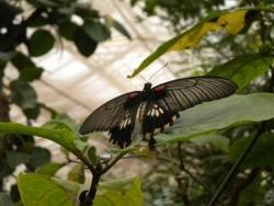 Serre aux papillons 26 04 2102 015.jpg