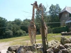 Zoo de Jurques : sortie été 2012