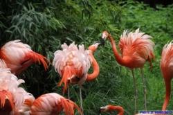 Sortie au jardin des plantes le 5 mai 2012
