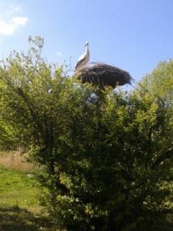 Parc cigognes (2).jpg