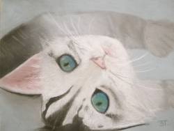 Chat pastel - Blanche 12ans