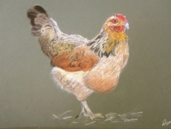 Poule pastel- Monique
