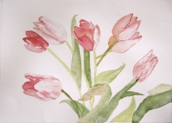 tulipes à l'aquarelle Michèle