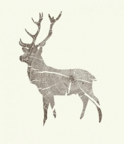 Wood Grain Stag by Kyle Naylor