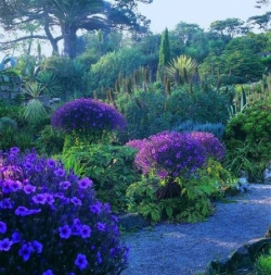 Tresco Abbey Garden.