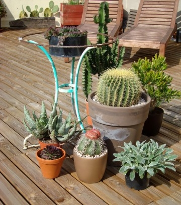 des cactus pour une terrasse plein sud lejardindeclaire. Black Bedroom Furniture Sets. Home Design Ideas