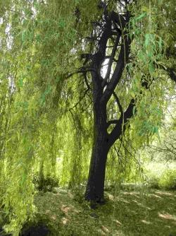 Arboretum_Vincennes