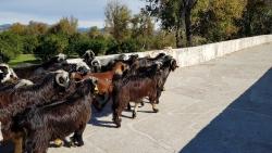 Le pont seljoukide d'Aspendos