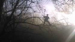 elagueur dans la brume