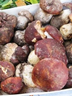 La foire aux champignons de Saint Bonnet-le-Froid