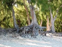 Philaos sur la plage de Saint Gilles