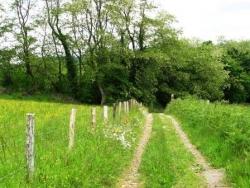 En chemin vers Oloron
