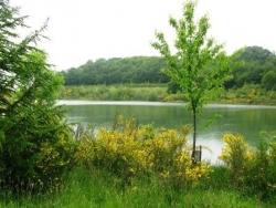 Lac du Petit Lées
