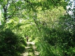 Sur le chemin de l'Isle Arné