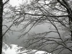 Les branches craquent..