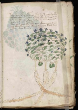 T1 : L'indéchiffrable manuscrit de Voynich