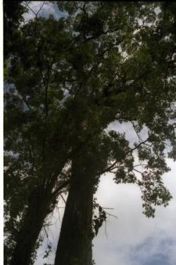 des arbres toujours impressionants