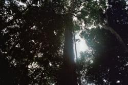 des arbres immenses