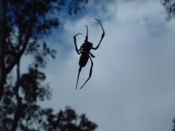Araignée vue de dessous à contre jour