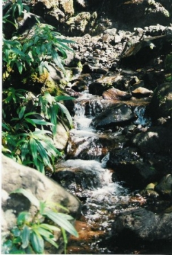 petite rivière le long d'un chemin