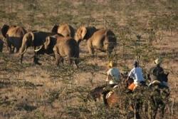 Des éléphants et des hommes...