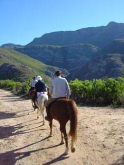 Dans les montagnes couvertes de fynbos