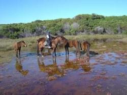 Rencontre avec les chevaux sauvages de la lagune