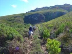 Dans les montagnes et le fynbos