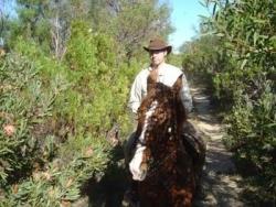 Thomas et son cheval dans les proteas en fleurs !