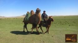 Randocheval Mongolie
