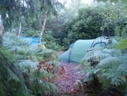 camping en forêt