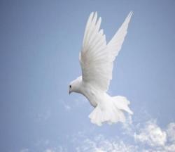 Le Saint Esprit (colombe) 5