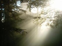 Soleil en forêt 1