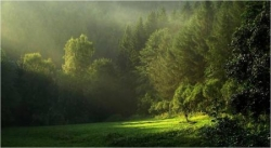 Soleil en forêt 3