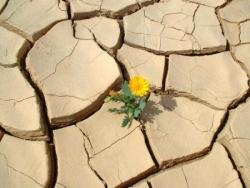 Fleur dans le désert