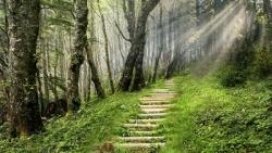 Escalier en forêt