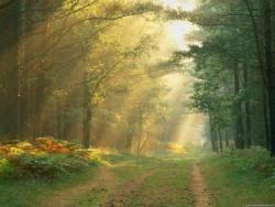 Soleil en forêt 6